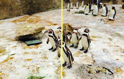 awesome-penguins-1